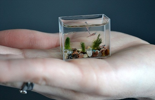smallest aquarium3