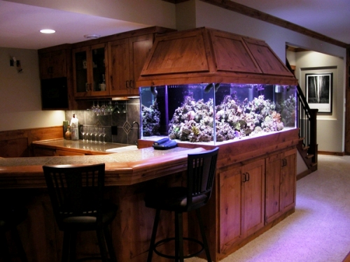 25 amazing basement remodeling ideas for Marine fish tanks